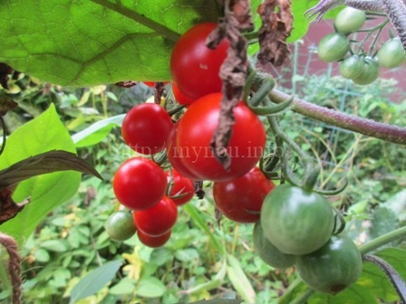 脳脊髄液減少症の園芸療法